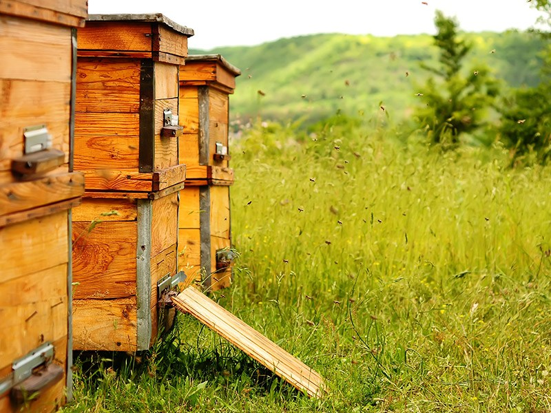 Why Is Raw Honey Better For You?